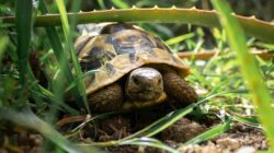 Tips for Trail Running at Night – Turtle